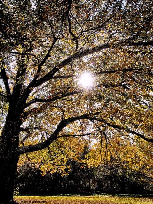 October Tree - Vertical