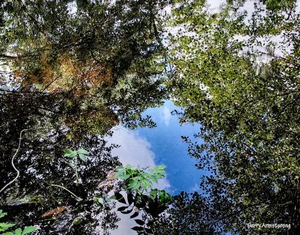 Perfect Reflection 46