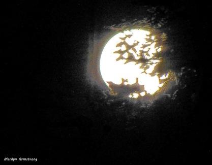 96-Blue-Moon-3