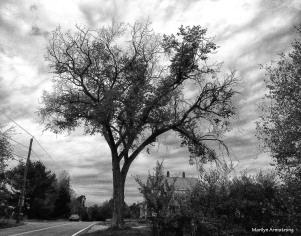 Tree Silhouette in B & W