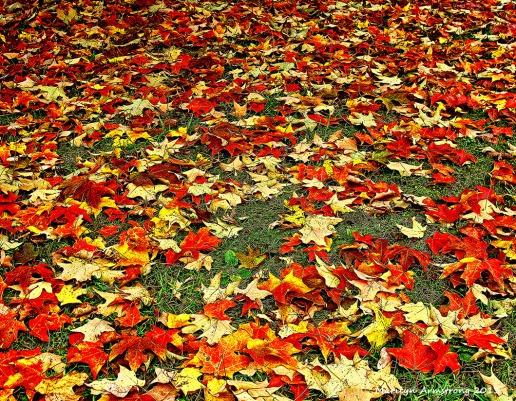75-LeafyLawn