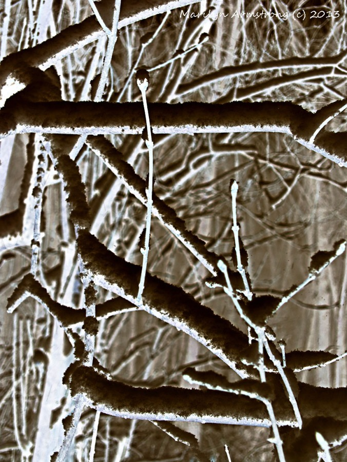 Negative Snowy Branches