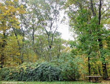 75-Backyard-179