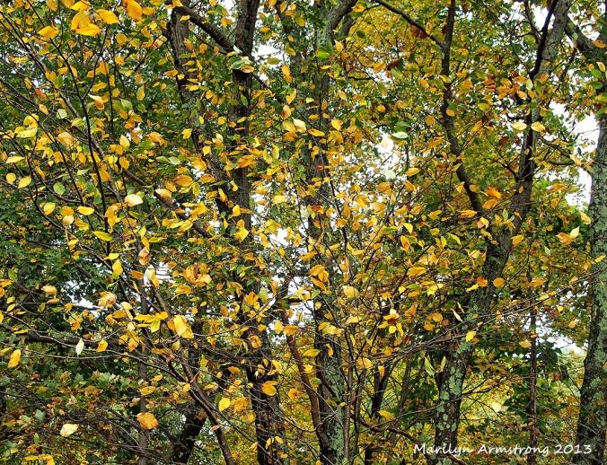Drifting leaves