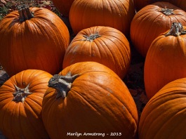 Pumpkin Patch 9