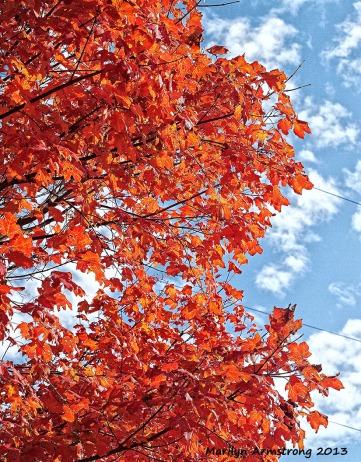 Autumn tree 1