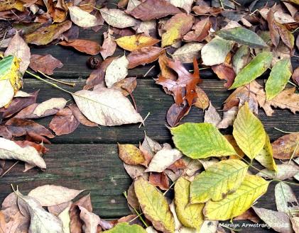 leafy deck