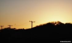 sunset with hawk
