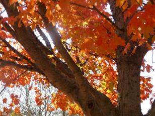 PumpkinsGAR- (48)