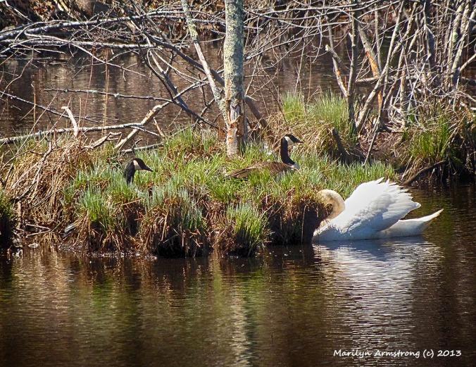 Swan defends