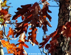Last Leaves 67