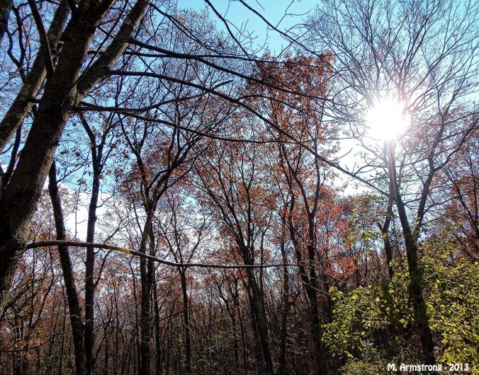 November Sunshine Woods