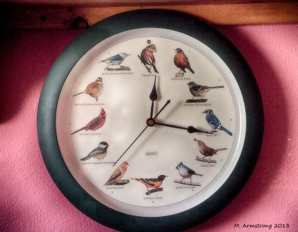 Bird Clock Office