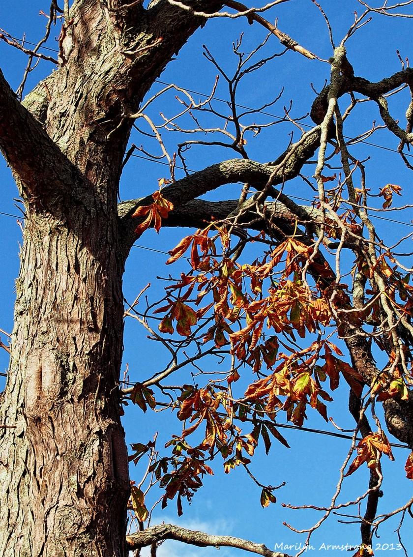 Bre tree end autumn