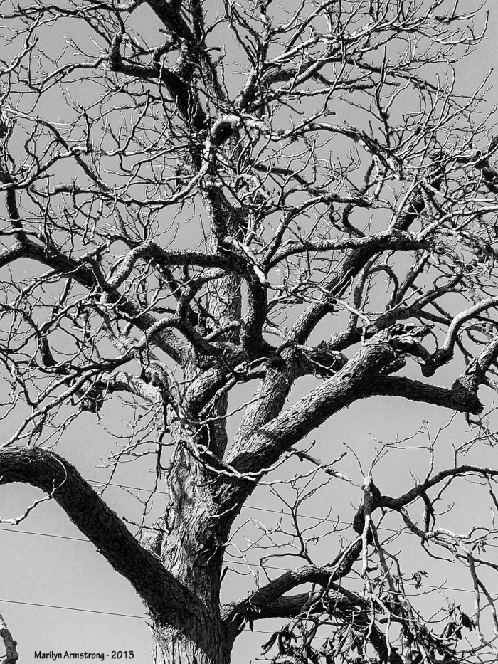 Leafless in Hyannis