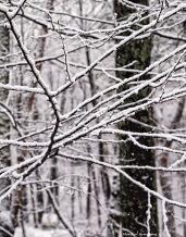 First snow 41