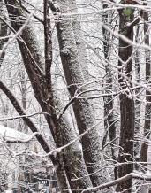 first snow 44