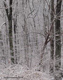 first snow 63