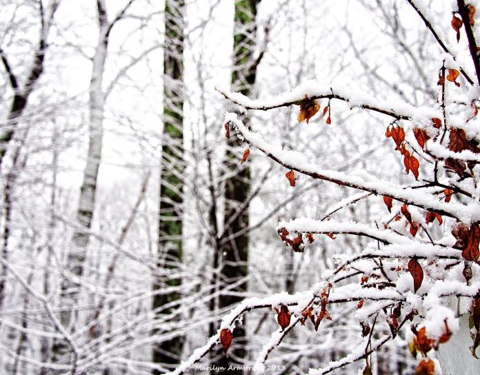 First Snow 25