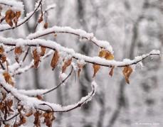 First Snow 34