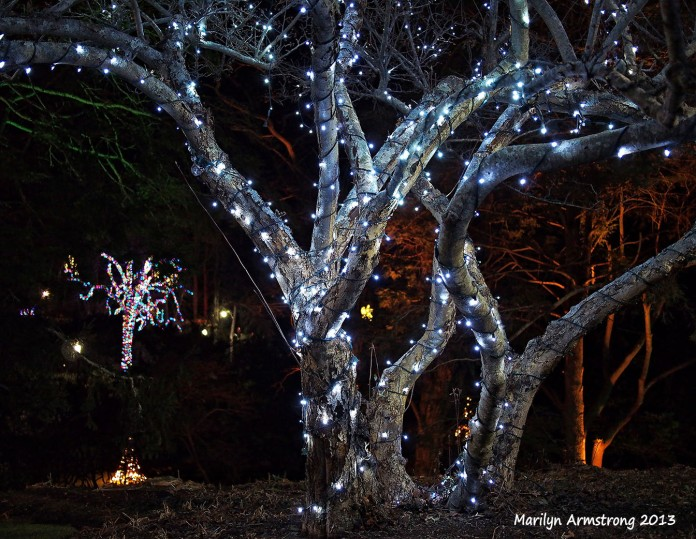 Tree alight