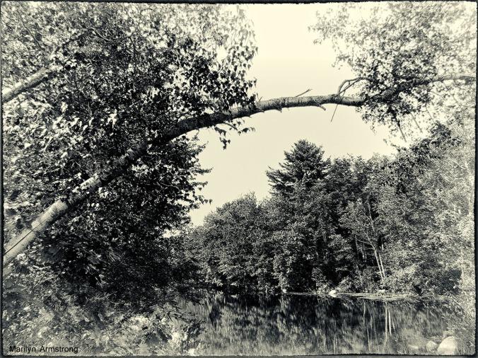 aldrich riverbank