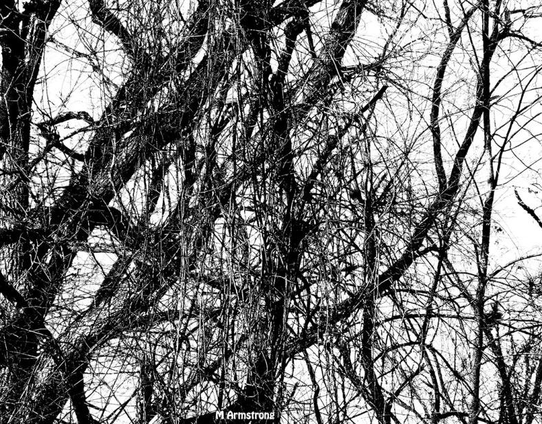 75-Branches-BW_08B