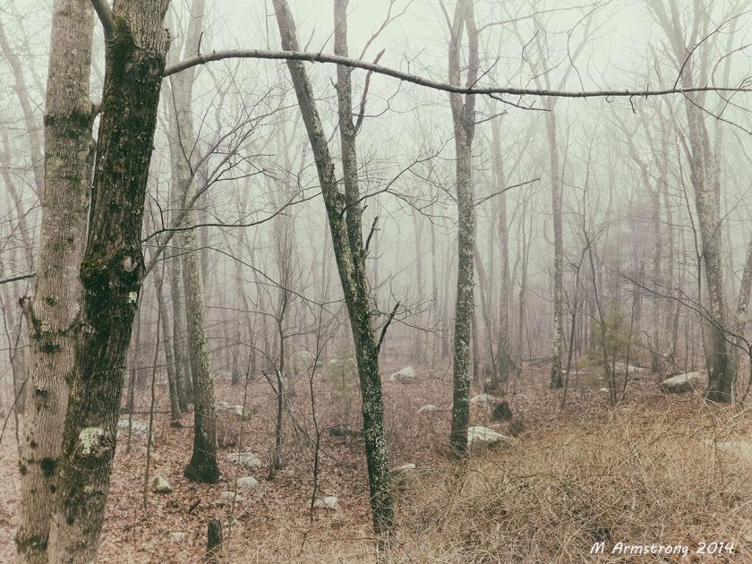 75-FoggyWoods-ANLG_00