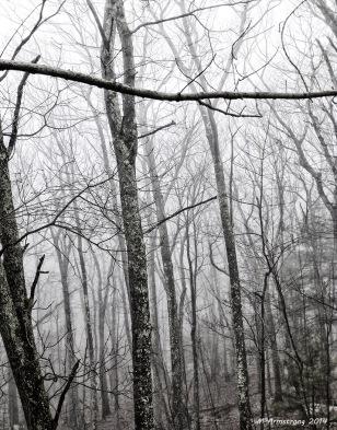 75-FoggyWoods_11