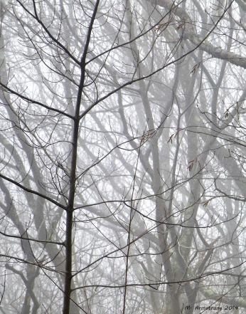 75-FoggyWoods_12