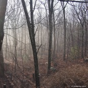 Early morning mist in the woods in January