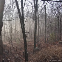 Early mist in the woods in January
