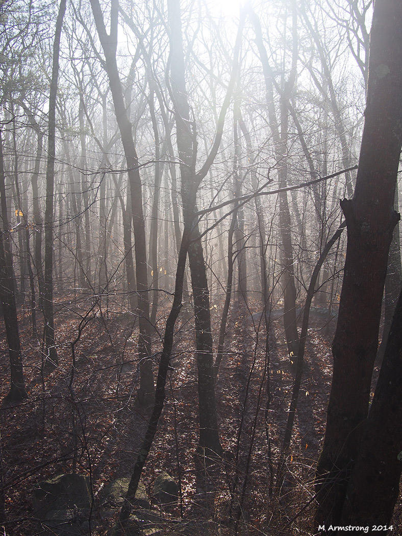 The muted colors of the misty woods in the early morning
