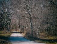 Bifurcated - Two paths separate. One remains a dirt path in the woods, the other smooth and pave. Pick your favorite
