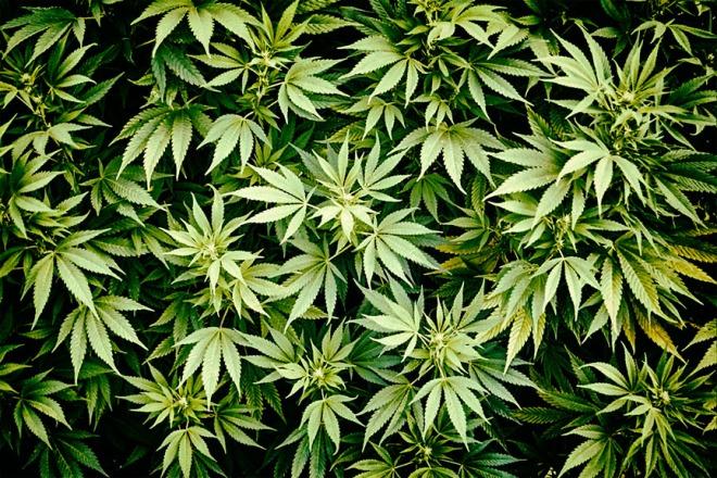 marijuana in my dreams
