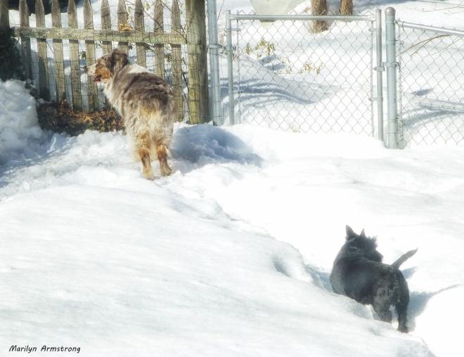 75-Bishop-Bonnie-snow_50
