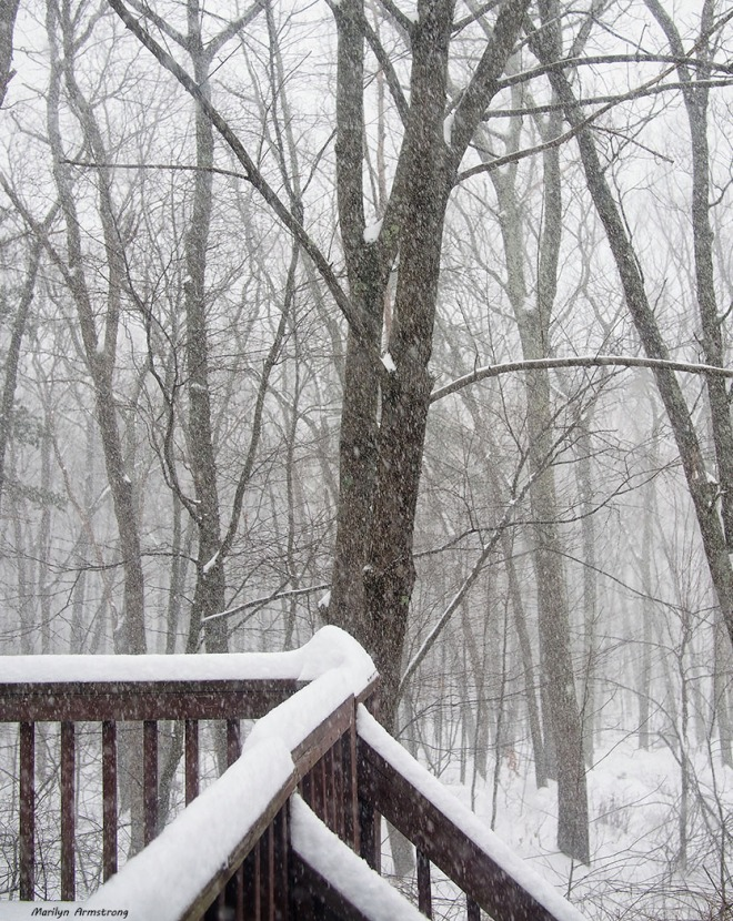 SNOWING HARD 1