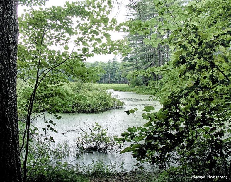 75-Wetlands-NK