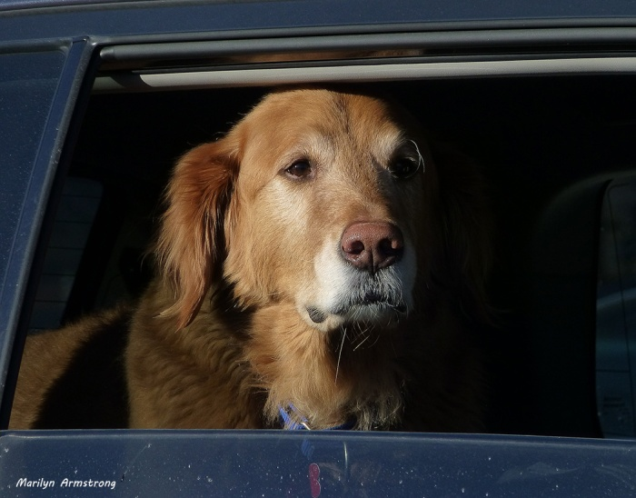 A golden retriever is as yellow as I can get!