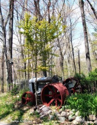 tractor with daffodils