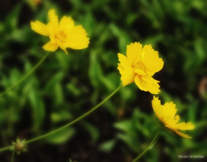 yellow flowers 82
