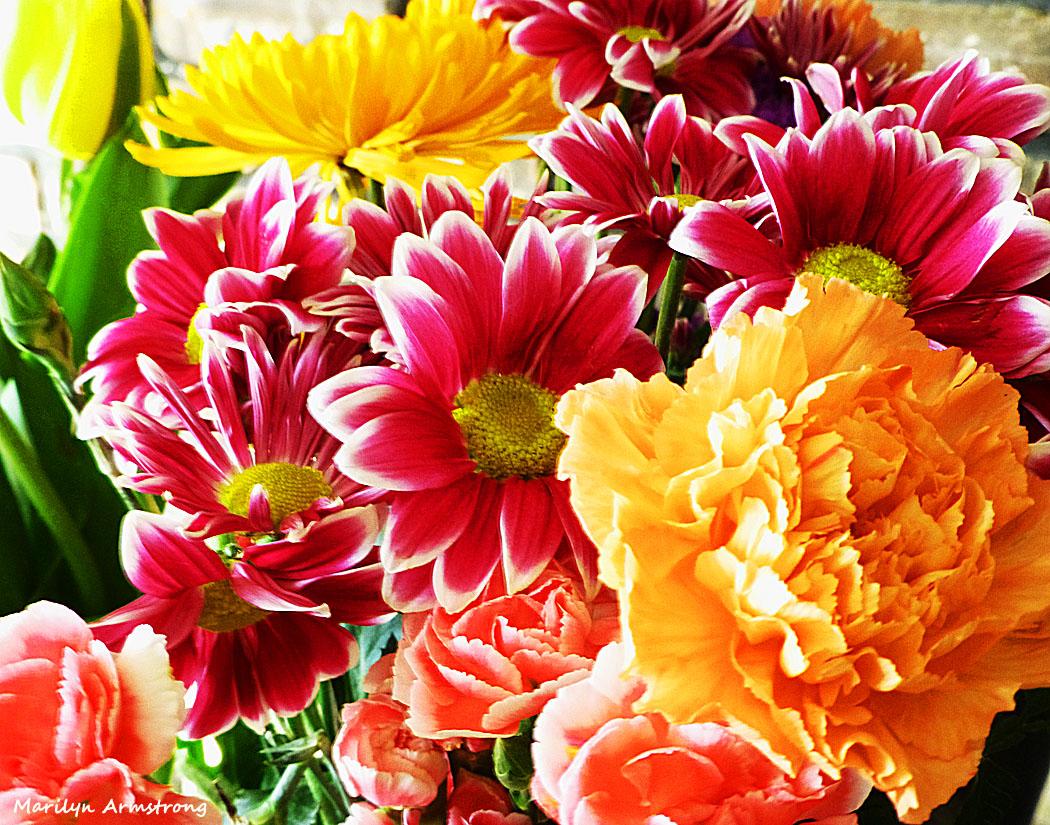 Oh The Pretty Flowers Serendipity Seeking Intelligent Life On Earth