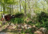 wild garden may 2014
