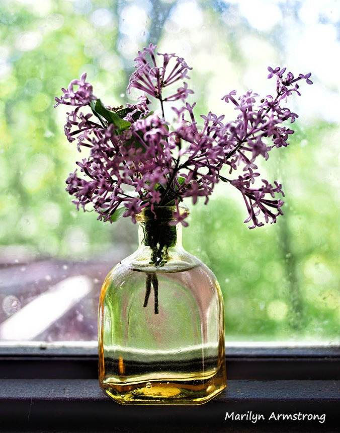 lilacs may 2014