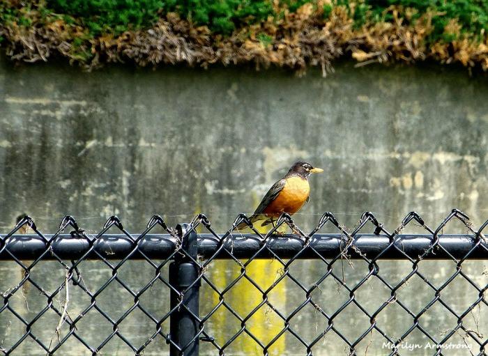 Hello little Robin!