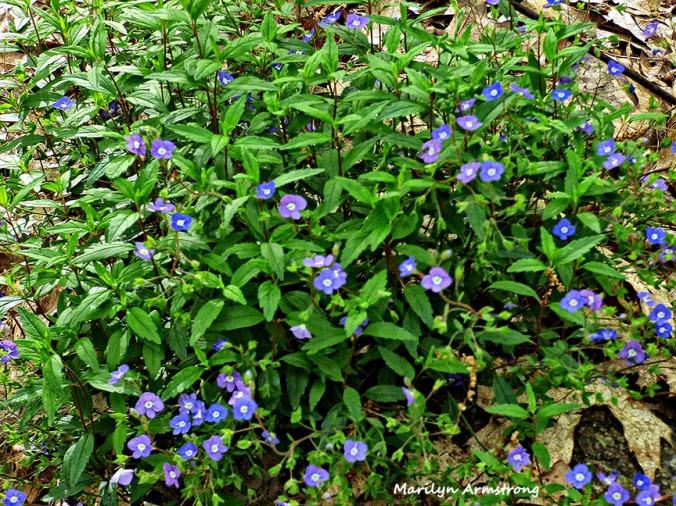 72-garden weeds