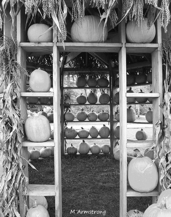 pumpkin house black and white