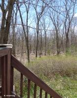 75-Spring-woods-2014