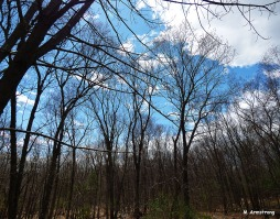 75-Woods-May-2014-1