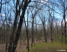 75-Woods-May-2014-2